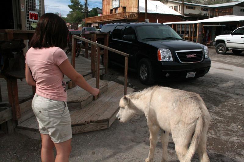 burros en Oatman, Arizona 2