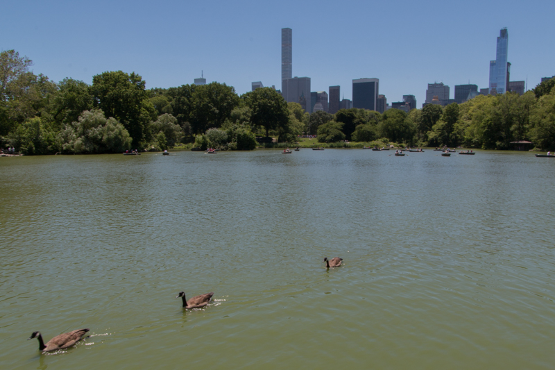 vistas de The Lake desde el Hernshead de Central Park en Nueva York
