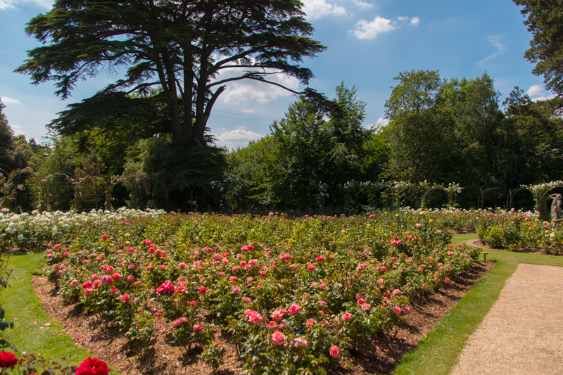 The Rose Garden en Blenheim Palace