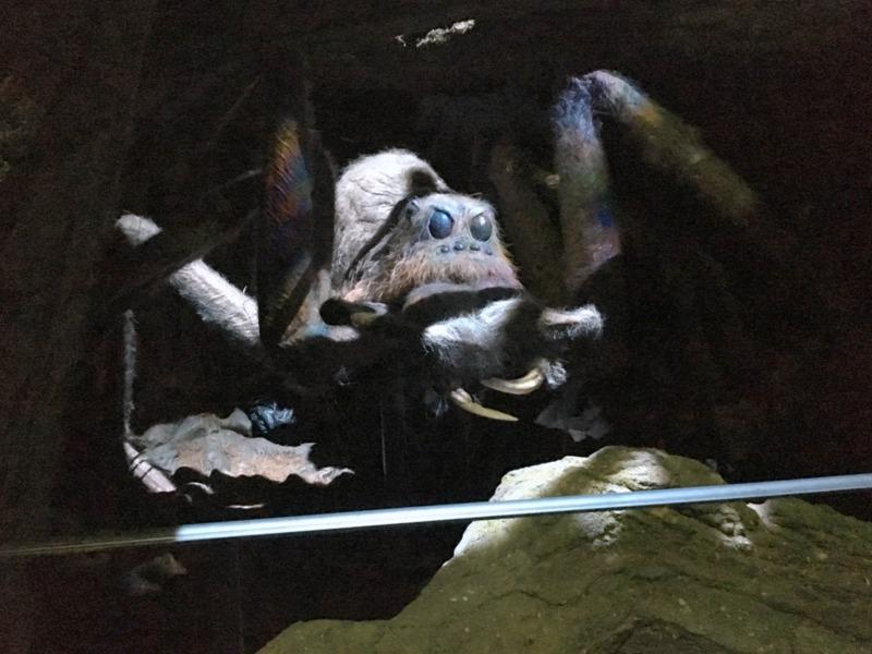 Aragog en el Bosque Prohibido HP