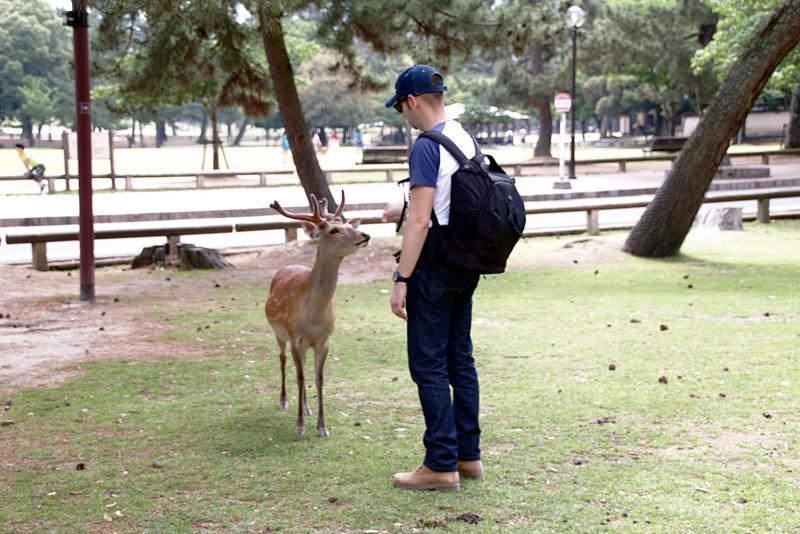 Sergio con un ciervo en el parque de Nara