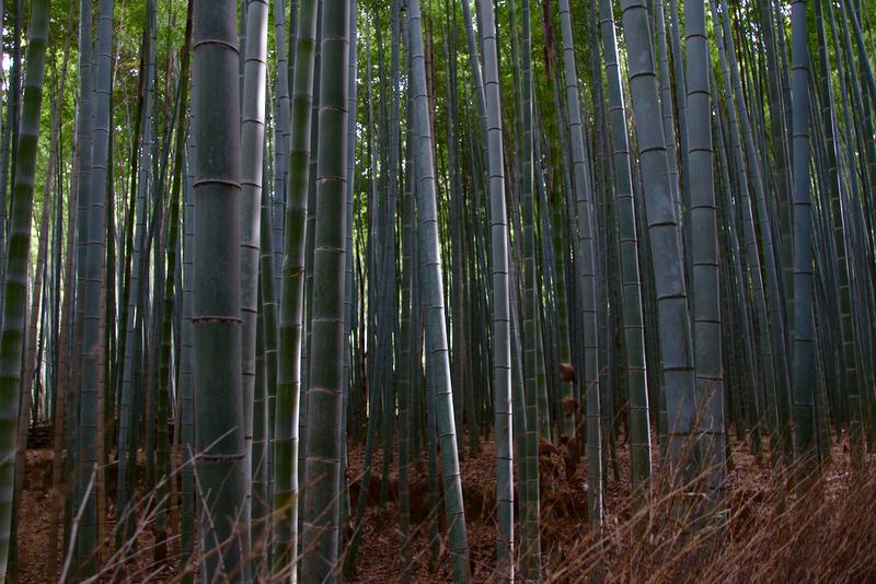 bosque de bambú de Arashiyama en Kioto1