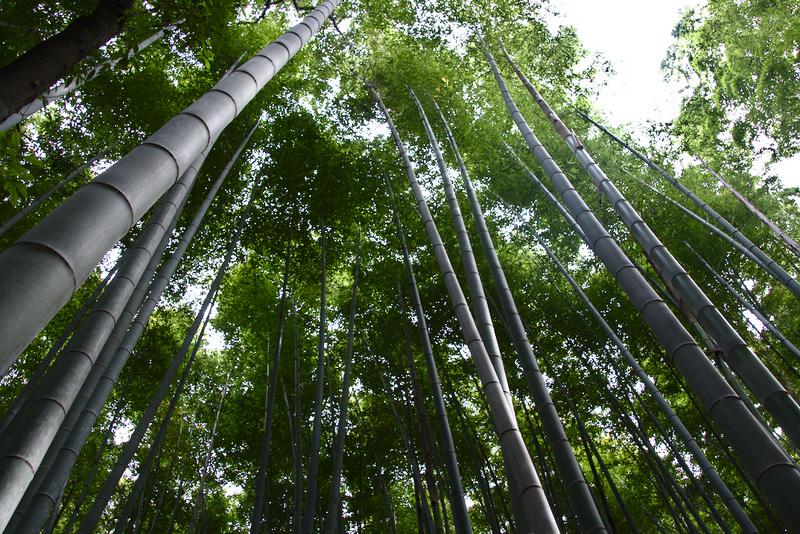 bosque de bambú de Arashiyama en Kioto2