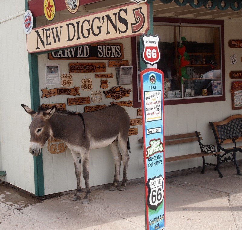 burro en Oatman Arizona