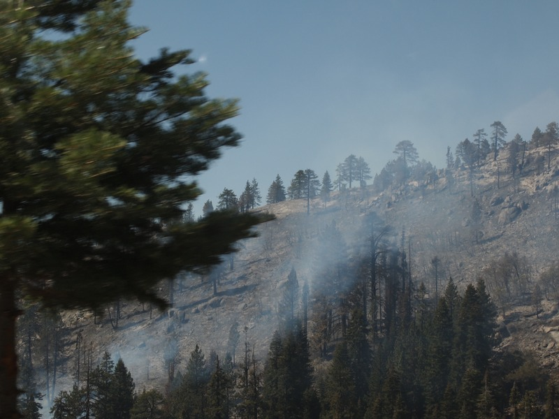 restos del incendio que tuvo lugar en Yosemite unas semanas antes