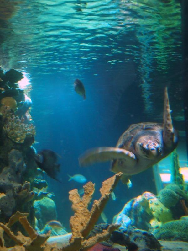 tortugas marinas en el Oceanário de Lisboa