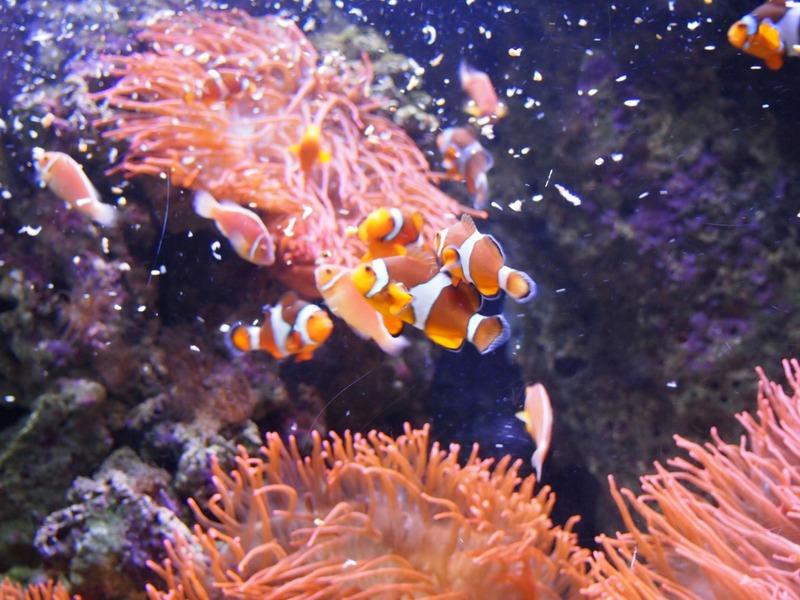 Nemo en el Oceanário de Lisboa