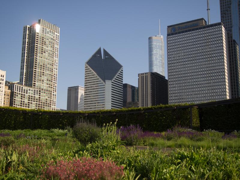 vista de los edificios que rodean el Millenium Park de Chicago desde el Laurie Garden