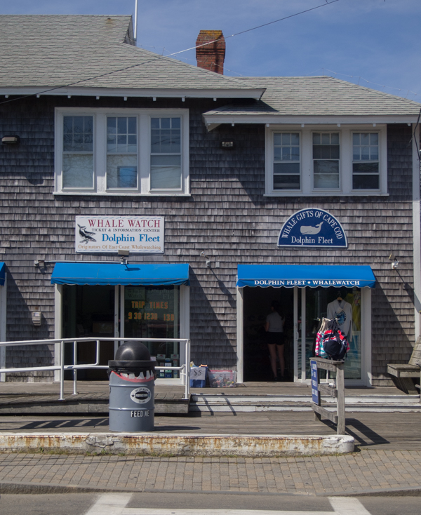 empresa de avivamiento de ballenas en Provincetown Cape Cod Massachusetts