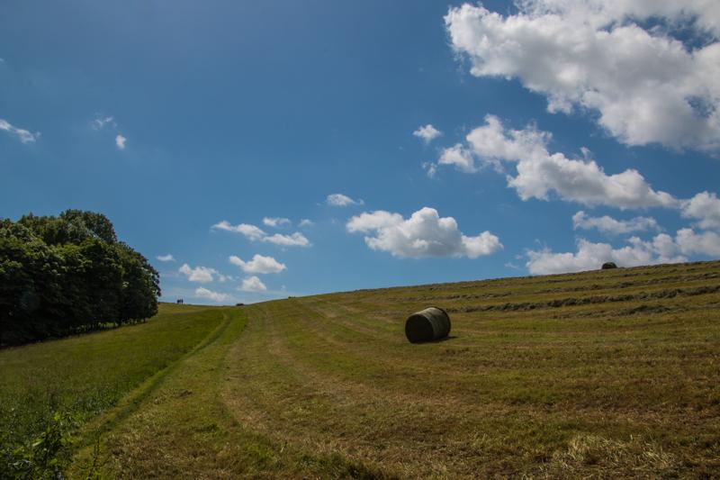campos de Quenington 2