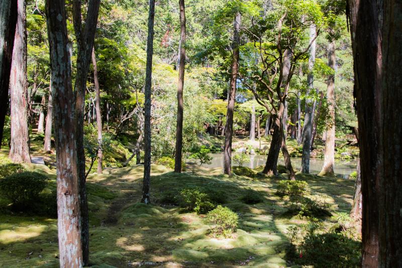 jardines del Kokedera 2