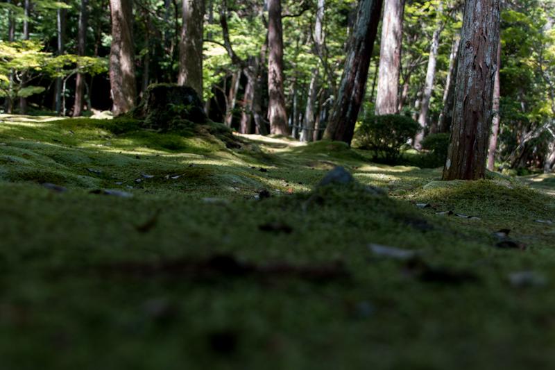 jardines del Kokedera 5