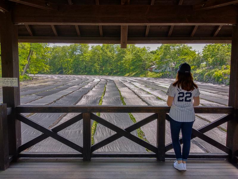 Puente de la Fortuna granja wasabi Daio 2