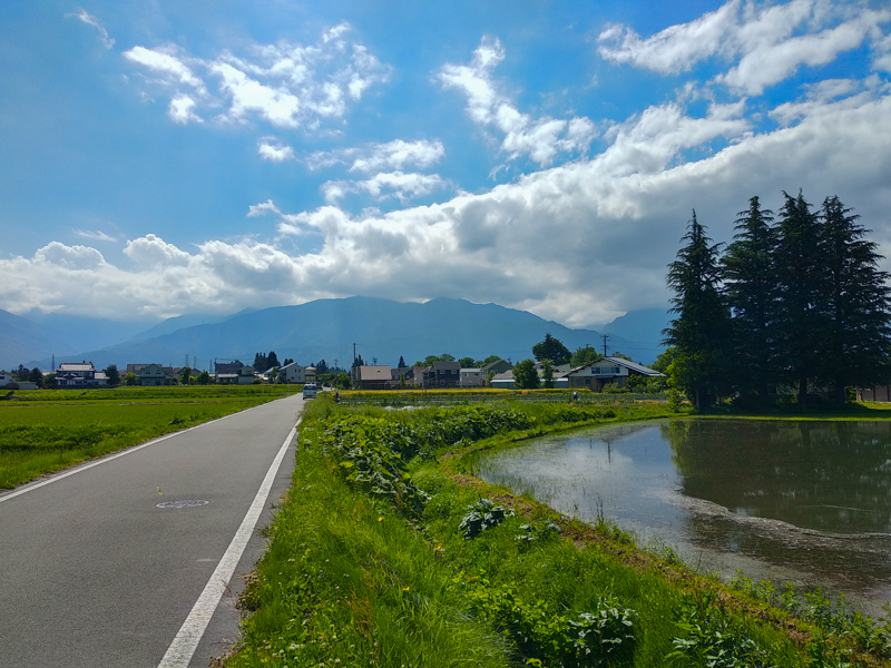 de camino a la granja de wasabi