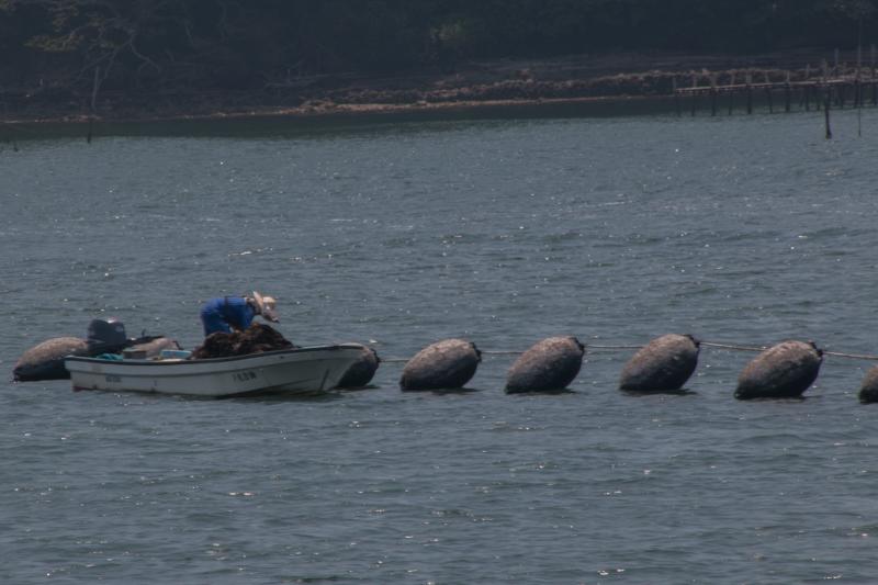 pescadores en Matsushima 2